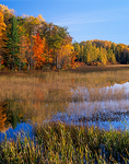 Autumn hardwood forest and shallow marsh at the edge of West Plum Lake,  Northern Highland American Legion State Forest
