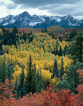 Snow capped San Juan range above the autumn colors in Dallas Creek valley  