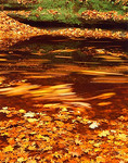 Fall leaves floating in the waters of the Upper Dells Canyon bordered by moss covered sandstone shelf