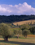 Rolling forested hills and fields of the Val d'Orcia with scattered olive and cypress trees near the village of Castelnuovo dell'Abate