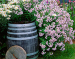 Garden detail of phlox and daisies surrounding an oak rain barrel