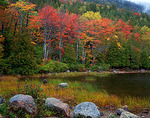 Fall  colored forest along Bubble Pond with granite boulders and pond grasses