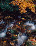 Fall colors on beach and rhododendron branches overhang a stream in Cades Cove