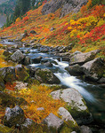 Bagley Creek flows through a rocky canyon with autumn colors of huckleberries, grasses and mountain ash at Heather Meadows