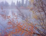 Fall colored branches frame a view of clearing fog and trees on the far shore of Curlew Lake