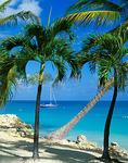 Palm trees frame a view of the blue waters of Dickinson Bay - Caribbean Islands
