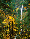 Looking through a late autumn forest to Elowah Falls on McCord Creek in John B. Yeon State Park