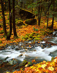 Starvation Creek flows through a forest of trees and moss covered boulders in autumn, Starvation Creek State Park