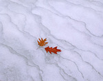 A pair of oak leaves lay on the frozen ice in LaSalle canyon in Starved Rock State Park, IL