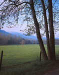 Great Smoky Mountains National Park, TN/NC: Morning sun on grazing horses in Cades Cove - early spring