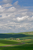 Whitman County, WA:WA Curving road leads to a farm with red barn nested in the rolloning green hills of the Palouse in eastern Washington