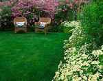 Vashon Island, WA:  Wicker chairs set in a cottage garden with blooming lavatera and feverfew