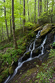 Great Smoky Mountains National Park, TN/NC: Small forest waterfall flowing over mossy boulders above the Middle Prong Little River in Spring