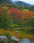 Acadia National Park, ME: Fall colored trees along the shoreline of Bubble Pond lined with granite boulders and pond grasses
