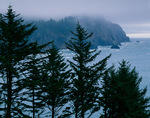 Tillamook County, OR: Coastal headlands wrapped by fog at Smuggler's cove screened by sitka spruce (Picea sitchensis) on Cape Falcon, Oswald West State Park