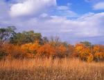 Goose Lake Prairie State Natural Area, IL: Dried golden rod and tall grass prairie at the edge of an autumn forest