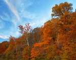 Fox Ridge State Park, IL: Oak/maple hardwood forest in fall color covers Fox Ridge above the Embarras River valley