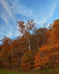 Fox Ridge State Park, IL; Oak/maple hardwood forest in fall color covers Fox Ridge above the Embarras River valley