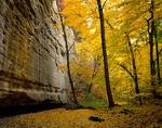 Starved Rock State Park, IL: Sandstone wall of Ottawa Canyon and fall colored
