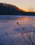 Starved Rock State Park, IL: Sunset colors reflected on the textured ice surface of Cunningham Slough