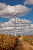 Bureau County, IL: Wind mills and dirt access road in a field of drying corn on the Crescent Ridge windfarm, autumn