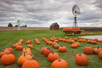 Bureau County, IL: Fall scene of pumpkins, windmill and distant red barn under gathering clouds, Miller's produce stand