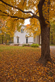 McLean County, IL: Historic Funks Grove Church framed by a maple tree in fall color