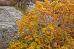 Shawnee National Forest, IL: Dramatic sandstone formations with an oak tree in fall color - Garden of the Gods Recreation Area