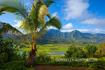 Kauai, HI: Palm tree frames the view of Hanalei Valley taro fields and central mountains in morning sun, Hanalei National Wildlife Refuge
