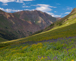 San Juan Mountains, CO: San Juan range from alpine meadow of American Basin