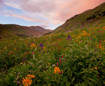 San Juan Mountains, CO: Sunset clouds illuminate a wildflower meadow in American Basin featuring paintbrush (Castilleja rhexifolia), delphinium (Delphinium barbeyi) and sneezeweed (Dugaldia hoopesii)