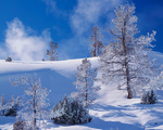 Yellowstone National Park, WY: Hoar frosted trees from the lower terraces of Mammoth Hot Springs in winter