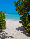 Virgin Gorda, British Virgin Islands, Caribbean: An opening to the white sand beach at Savannah Bay