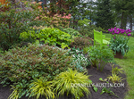 Vashon-Maury Island, WA: Perennial garden featuring astillbe, Japanese forest grass, hellebores, trillium, and pieris with a chartreuse bench and bright purple tulips