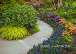 Vashon-Maury Island, WA: Pathway through a spring perennial garden featuring hakonechloa macra 'aureola', vibernum; ajuga, heucheras, and rhododendron