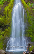 Olympic National Park, WA: Marymere Falls flowing over moss and fern covered basalt rock near Crescent Lake