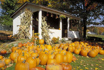 Autumn photo of pumpkin stand in Amish country.