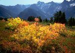 Mt. Dickerman fall colors.