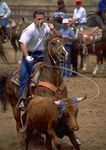 Steer roping event at rodeo.