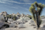 Joshua Tree National Monument.
