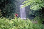 Tropical waterfalls in Australia.