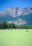 Grazing sheep in mountain pasture.