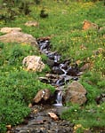 Colorado stream with wildflowers