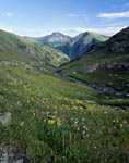 Wildflowers in Colorado mountains