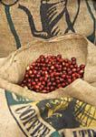 Sacks with coffee beans