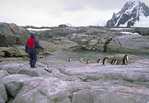 Tourists viewing penguins in Antartic