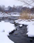 Winter scene at Botanical Gardens