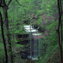 Big Clifty Waterfalls in the Spring