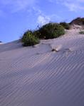 Sand dunes on Padre Island