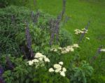 Mixed herbs in the garden